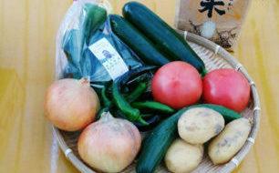 夏野菜いっぱい!7/8(土)は「やしろ自然野菜工房」「IQ農場 神戸自然野菜」の合同ブースです。