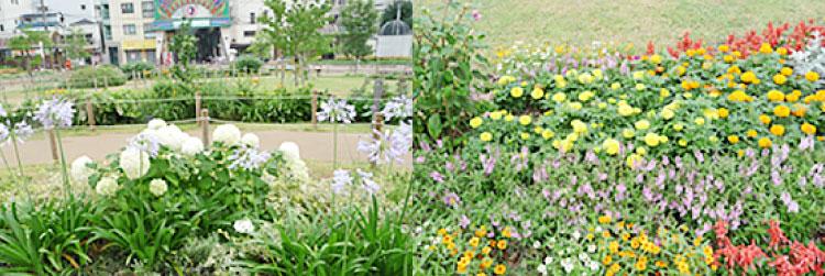 湊川公園花壇