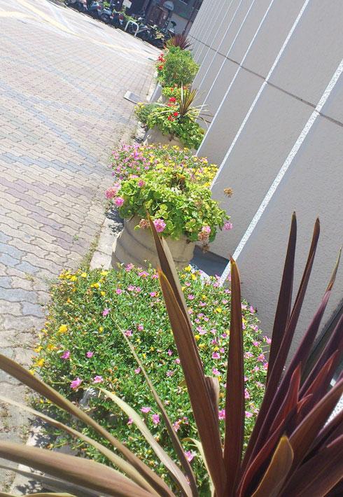 神戸信用金庫中央支店前花壇のようす