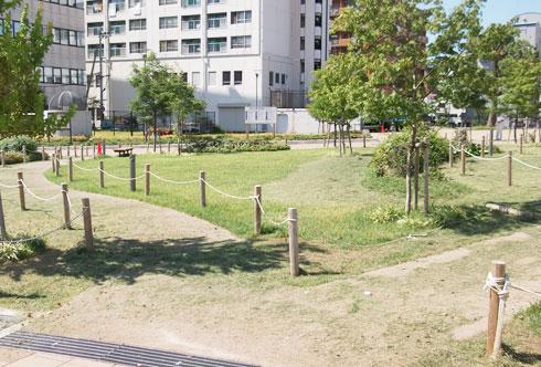 湊川公園花壇で芝のお手入れ