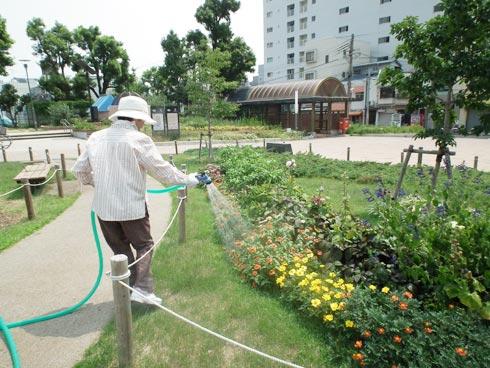 湊川公園花壇に水やり中で〜す。