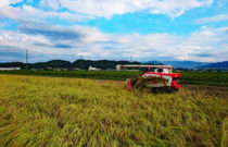 細見農園(丹波篠山産コシヒカリ)