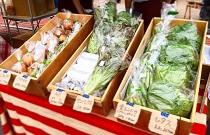 お野菜大学@神戸キャンパス