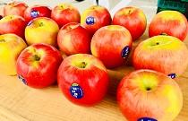 【りんご専門店】林檎道